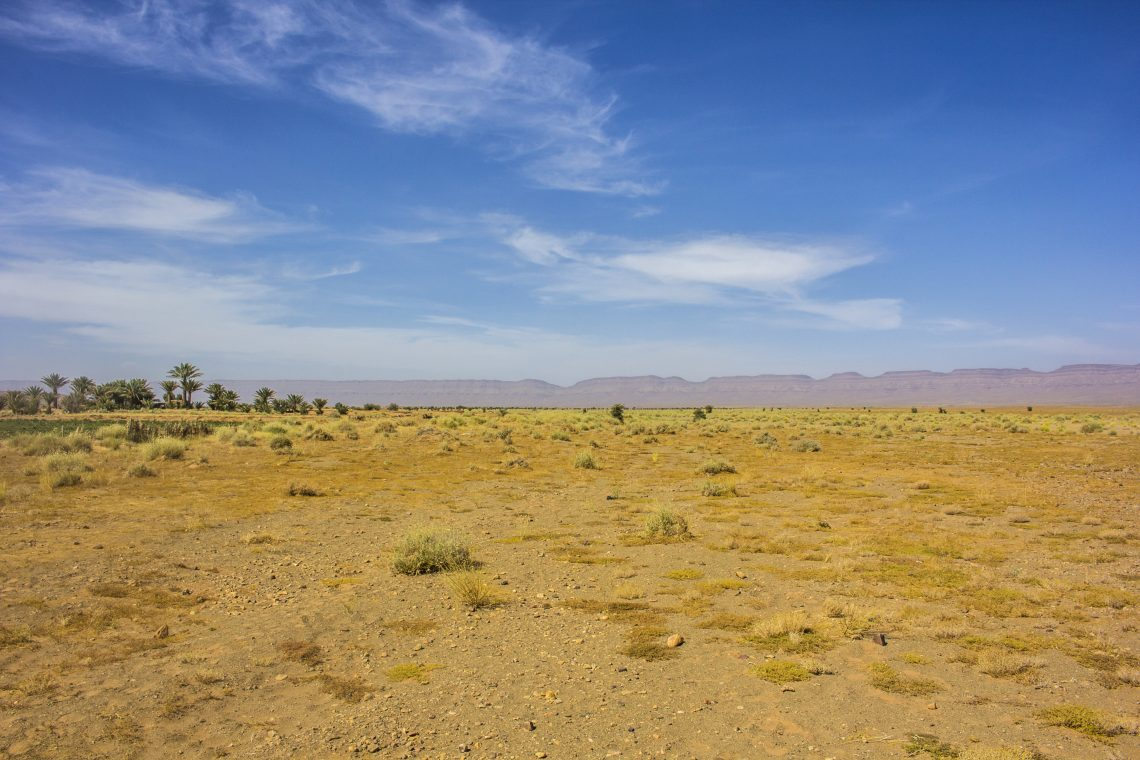 flat desert oasis in background